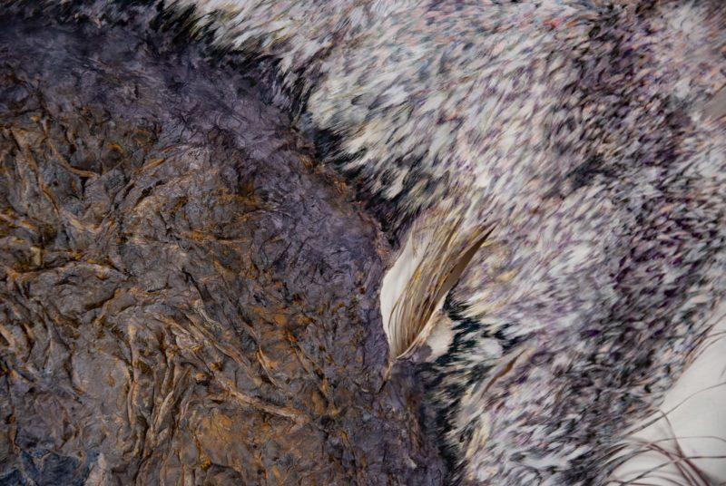 maren-ruben-18-a Lila-Flügel